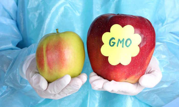Тест: узнайте ГМО, не ГМО или вымысел
