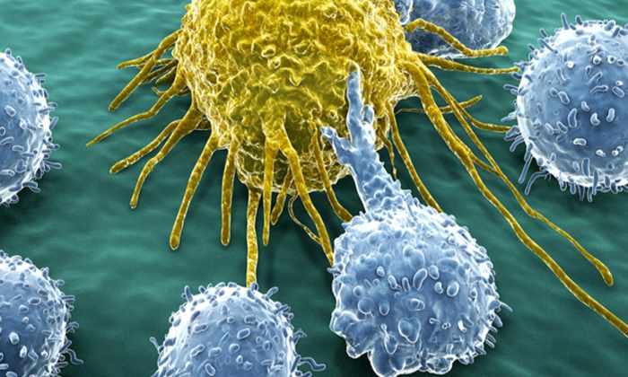 Иммунотерапия излечила безнадежных раковых больных