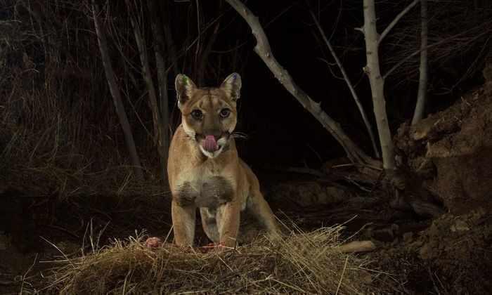 Фотоловушки для животных: кто ест по ночам
