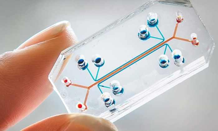 Создано первое в мире «сердце на чипе» со встроенными датчиками