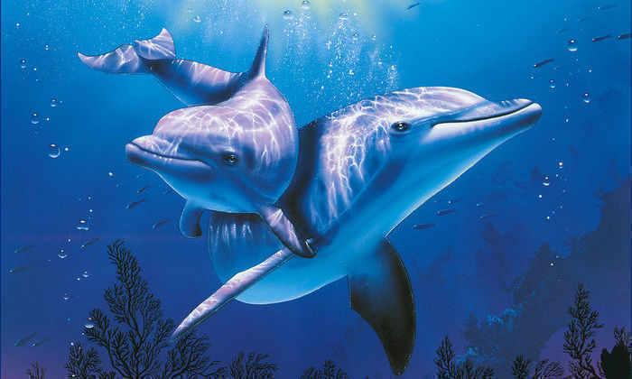 Ученые впервые записали «беседу» двух дельфинов