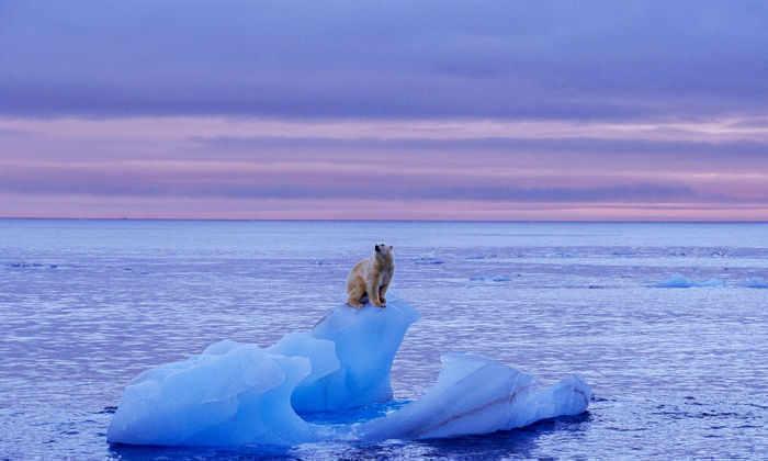 Количество морского льда на Земле достигло исторического минимума
