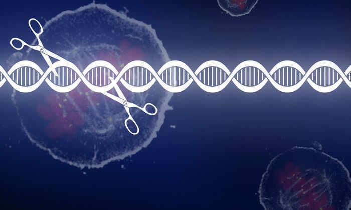 Генетики смогут вылечить рак: первый тест технологии CRISPR на людях