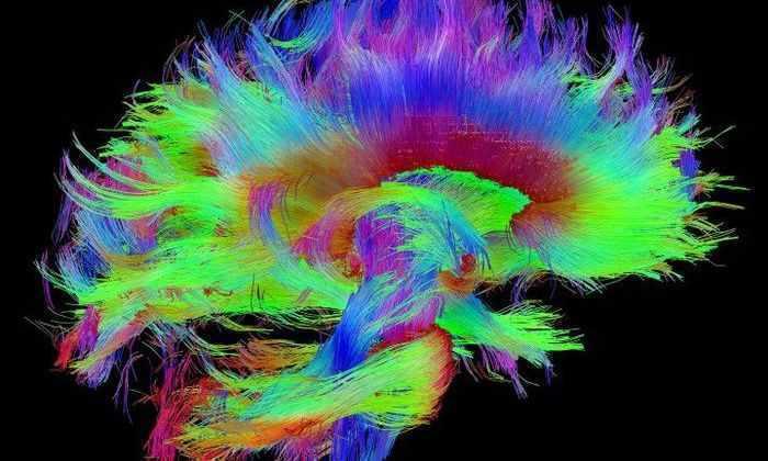 Гарвардские ученые думают, что определили физический источник сознания