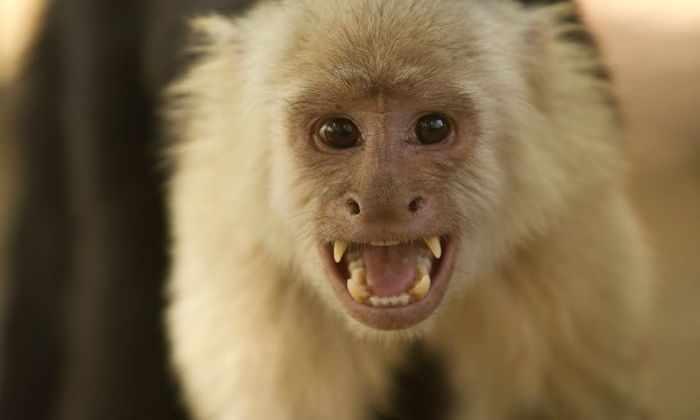 Антропология-2016: обезьяны-каменотесы и нераскрытая тайна Homo naledi