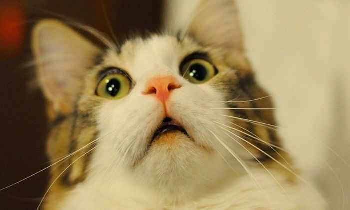 Тест: миф или правда о кошках?