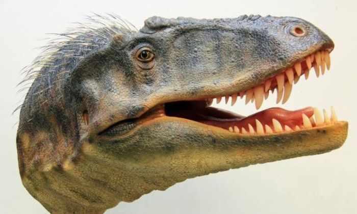 Размер не имеет значения: новый маленький динозавр умнее Ти-рекса