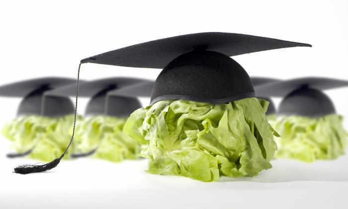 Пища для ума: что есть, чтобы мозг работал лучше