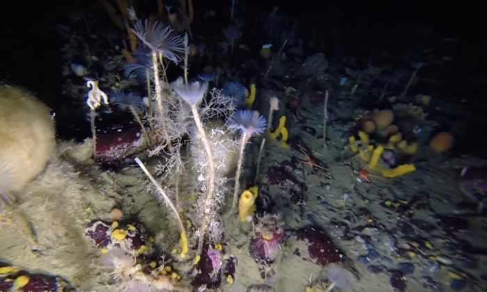 Под антарктическим льдом обнаружена разноцветная плантация