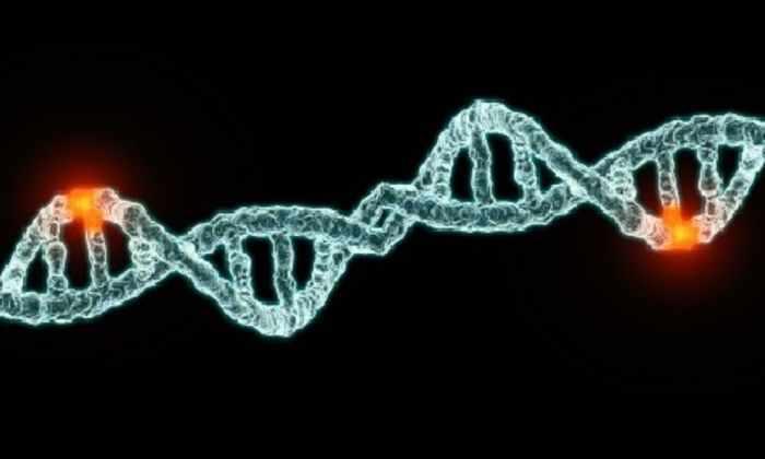 Большую часть ДНК людей сформировали вирусы