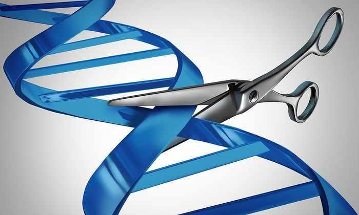 Генетики впервые испытали «ножницы для ДНК» на человеке