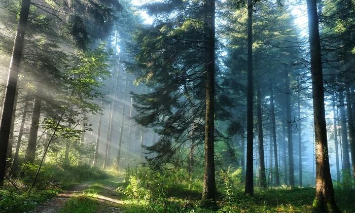 Деревья участвуют вохлаждении Земли— Ученые