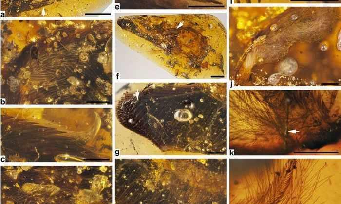 Ученые обнаружили два покрытых перьями крыла динозавра, сохранившихся в янтаре