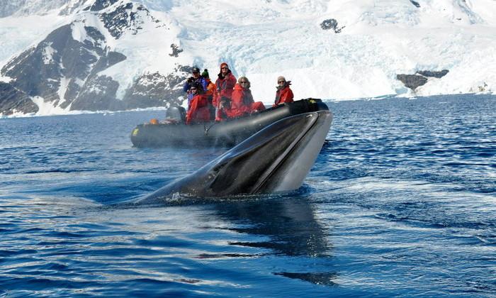 Ученые засняли, как выглядит Антарктика глазами кита