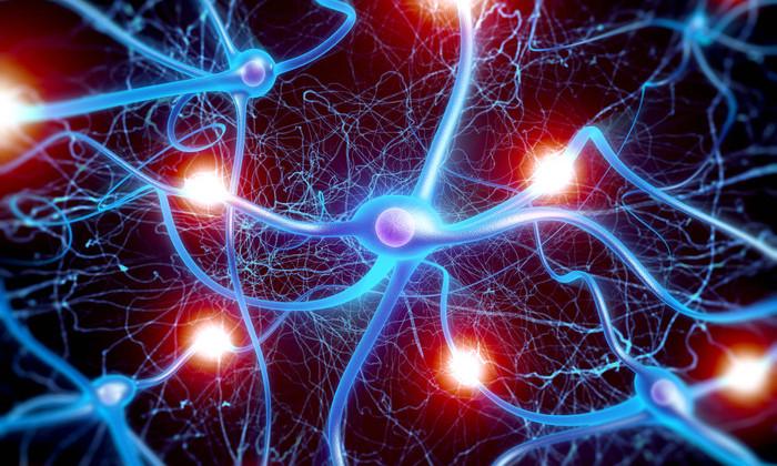 В мозге обнаружен гигантский нейрон. Он поможет объяснить природу сознания