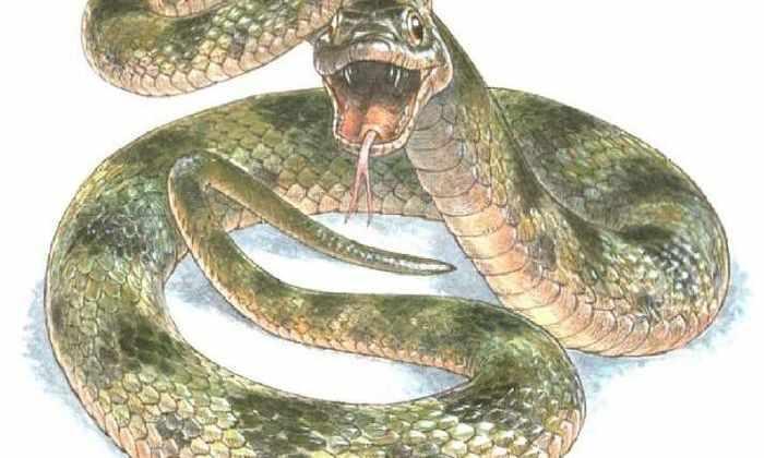 Окаменелая змея открыла свой истинный окрас