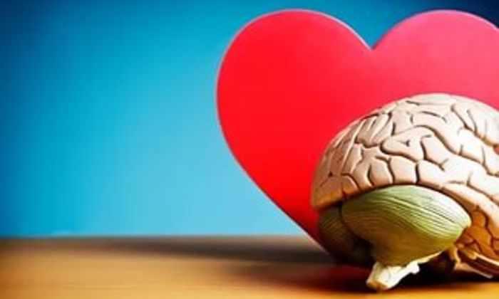 Ученые научились превращать клетки кожи в ткани сердца и мозга