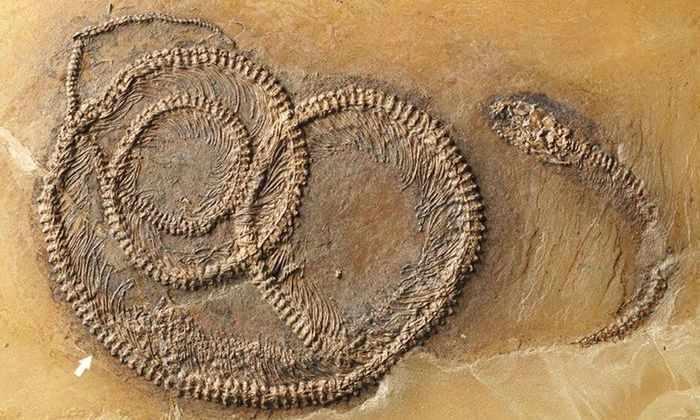 В останках змеи возрастом 48 миллионов лет нашли целую пищевую цепочку