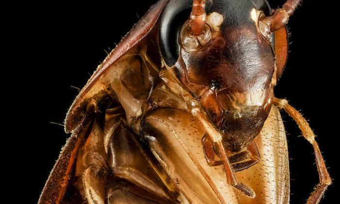 Человек с помощью силы мысли активировал крошечных роботов внутри таракана