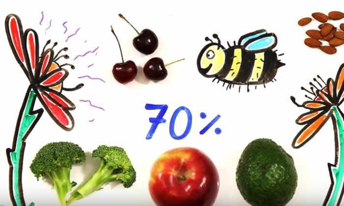 В Южной Каролине по случайности уничтожили миллионы пчел