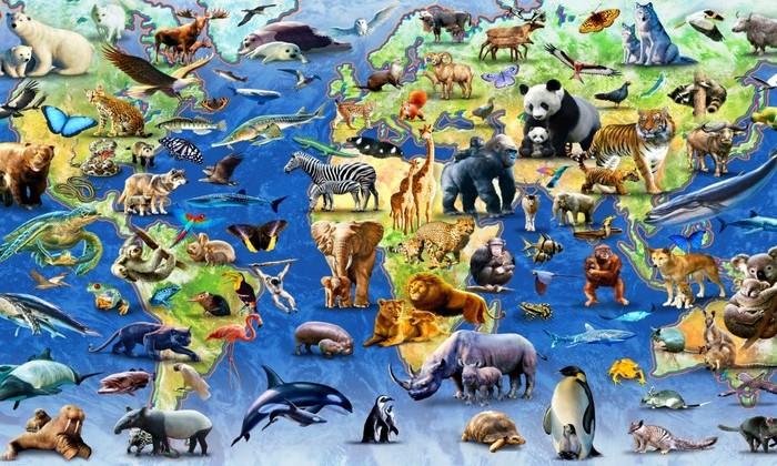 Стало известно, как выглядели первые животные на Земле