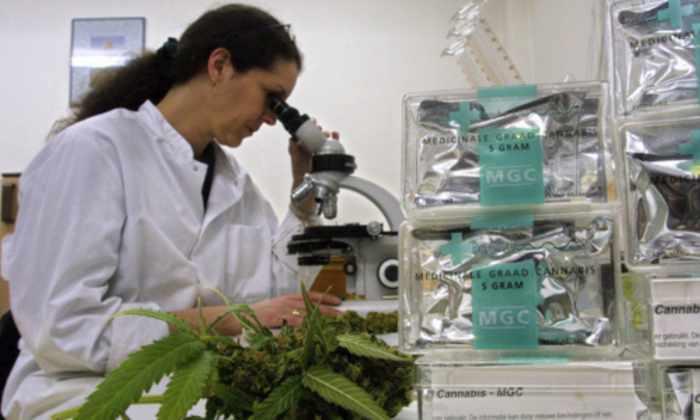 Появился журнал об исследовании марихуаны