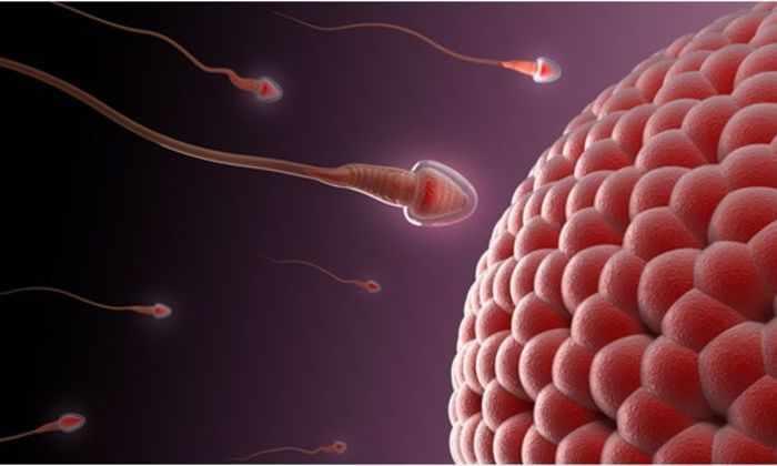 Испанские ученые нашли способ получать мужскую сперму из клеток кожи
