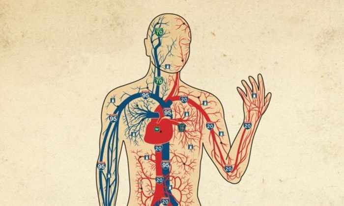 Суперкомпьютер создал модель системы кровообращения человека