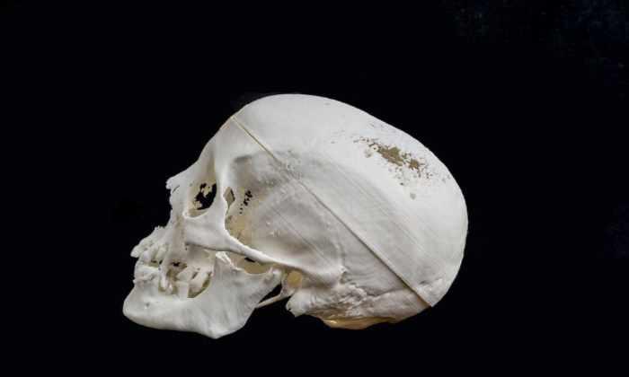 Ученые воссоздали лицо 2300-летней египетской мумии по черепу