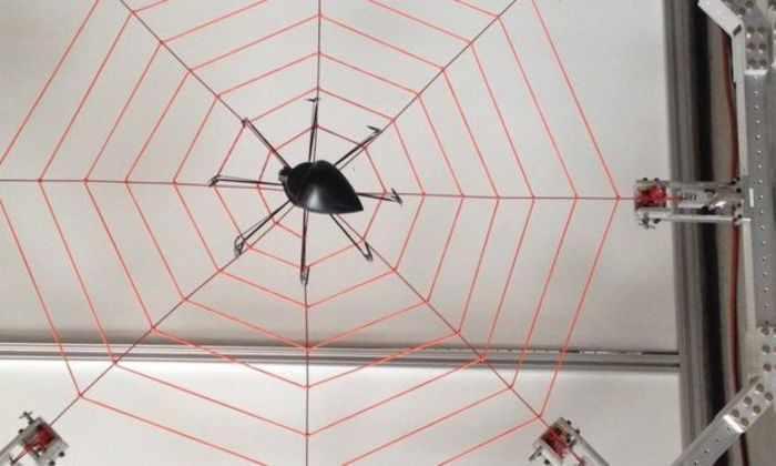 Ученые проверили паучье чутье к вибрации