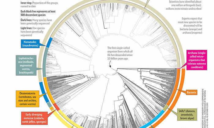 Ученые показали эволюцию всего живого на одной диаграмме