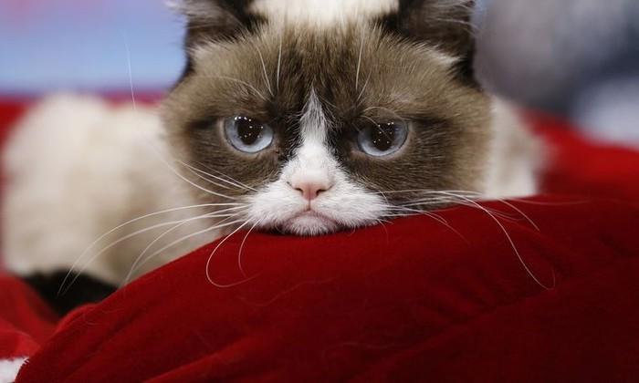 Вы заставляете свою кошку страдать. И вот почему