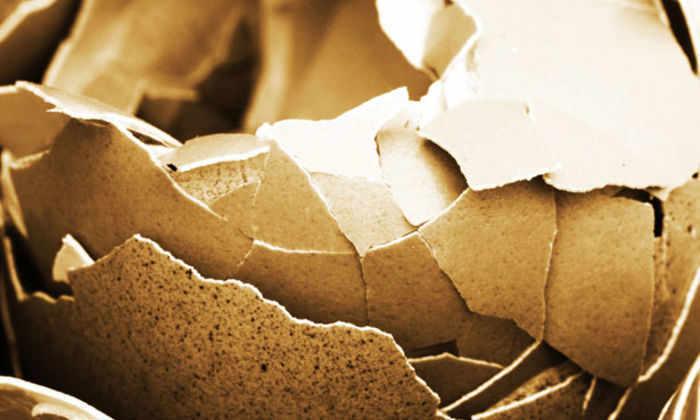Яичная скорлупа вдохновила ученых на создание новой биоразлагаемой упаковки