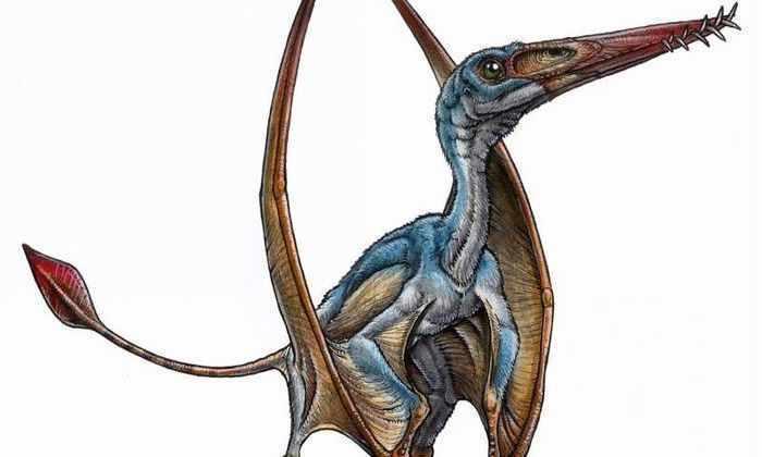 Ученые обнаружили новый вид птерозавров в Южной Америке