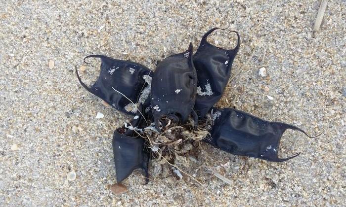 черные мешочки на берегу