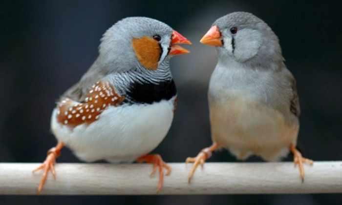 Исследование показало, что птицы понимают грамматику