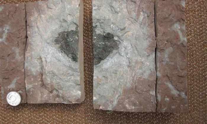 В Швеции нашли инопланетный камень возрастом 470 миллионов лет