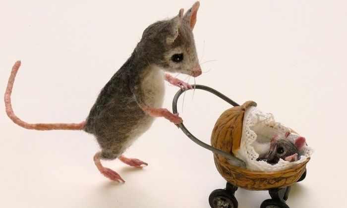 Ученые смогли разводить мышей без использования оплодотворенных яйцеклеток