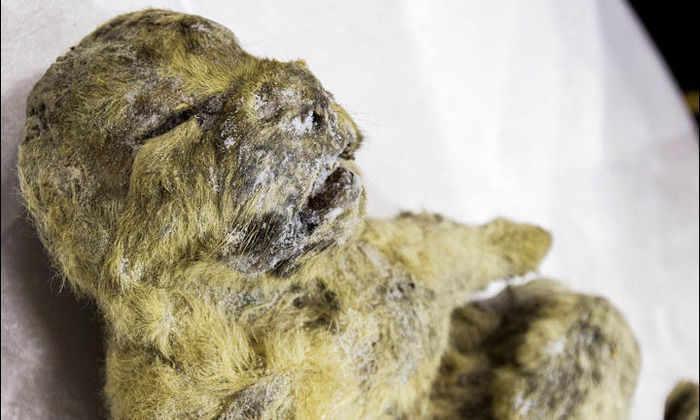 В Якутии найдено древнейшее грудное молоко в мире