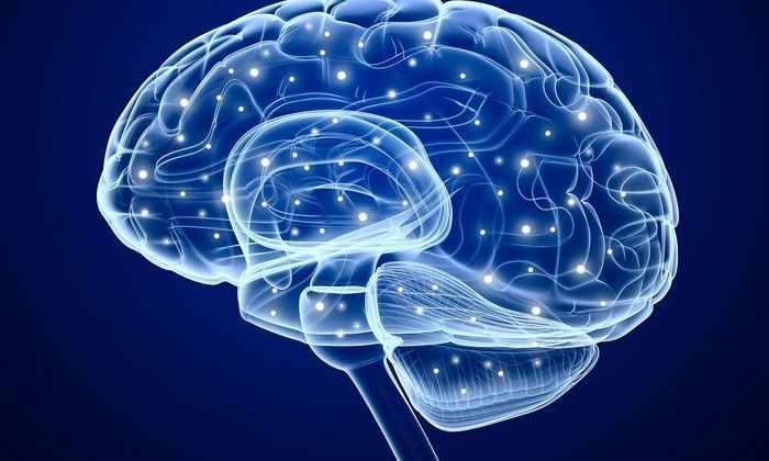 Впервые ученые наблюдали работу мозга в режиме реального времени