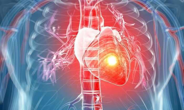 Синтетические стволовые клетки омолодили сердце и вылечили инфаркт