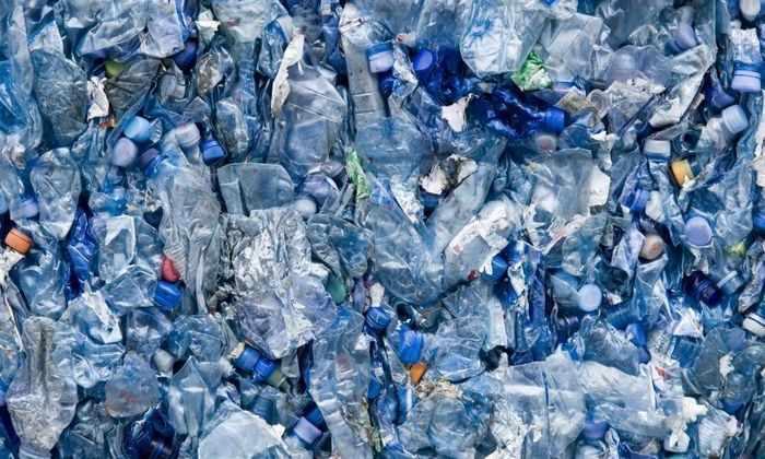 Недавно открытые бактерии могут питаться пластиком
