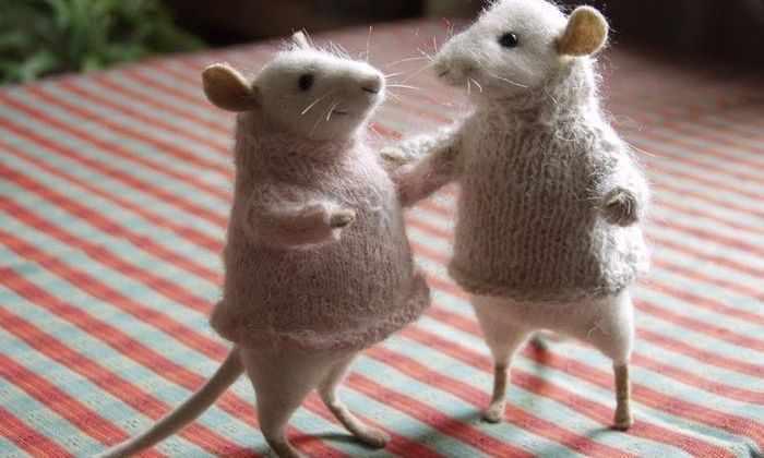 Помолодевшие мыши советуют перепрограммирование клеток для борьбы со старением