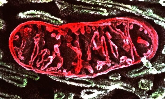 Температура внутри клеток оказалась неожиданно выше температуры тела