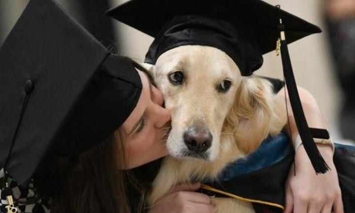 В США пес «окончил университет» вместе с хозяйкой. Трогательная история