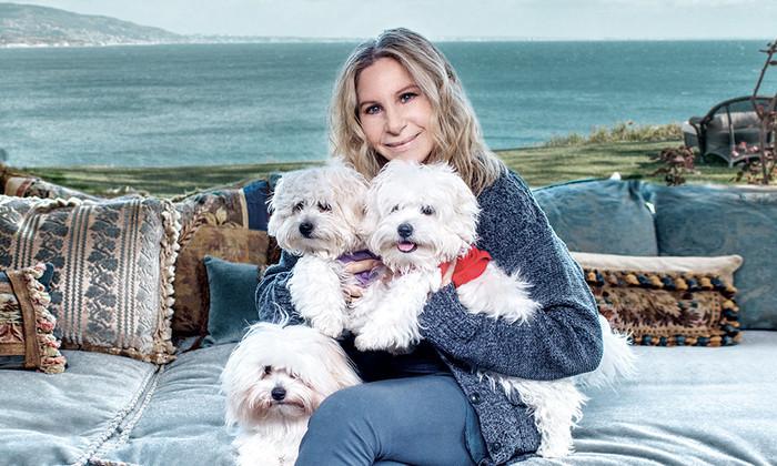 Как Барбара Стрейзанд дважды клонировала свою умершую собаку