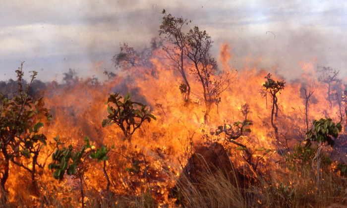 Пользоваться огнем предков человека научили пожары
