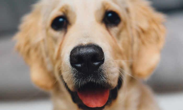 Собаки распознают слова и интонацию совсем как люди
