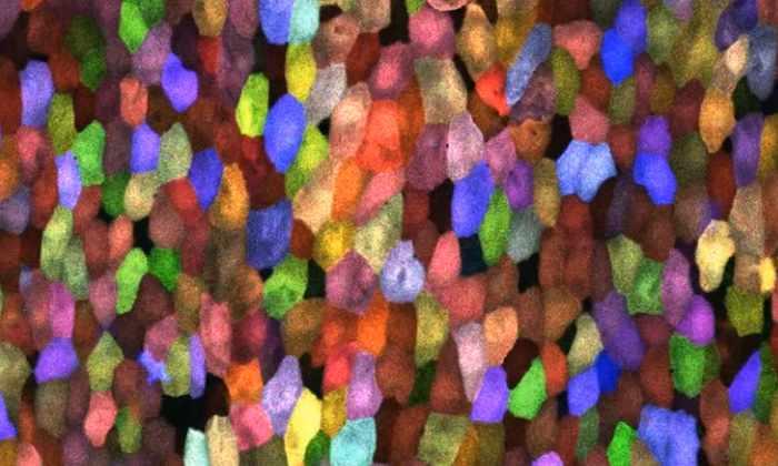 Видео: калейдоскоп клеток в трехмерном увеличении