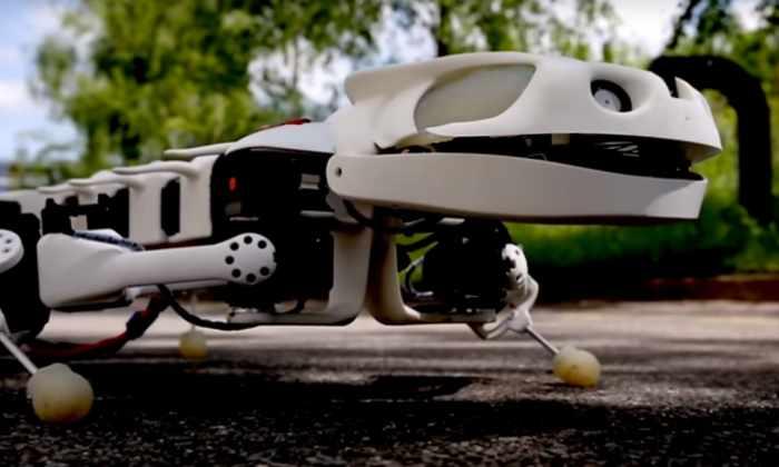 Видео: разработан первый робот-копия саламандры